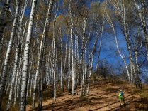 Herbstwanderung im Birkenwald