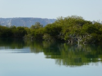 Im Mangrovenwald