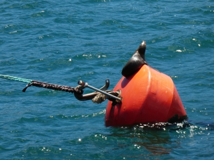 Seelöwe beim Sonnenbaden