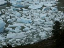 Eisabbrüche im Grey Gletscher