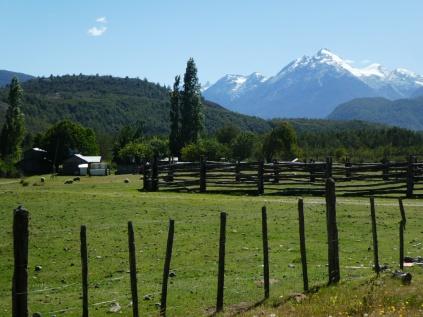 Idylle: Wiesen, Schafe, schneebedeckte Berge