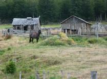 Stilleben mit Pferd - nach Villa Cerro Castillo