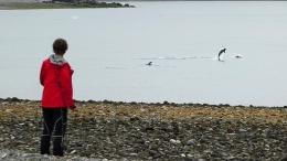 Eine Gruppe Delphine schwimmt an unserem Zeltplatz vorbei