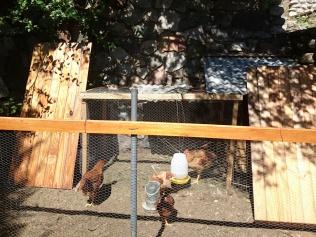 Ediths Hühner