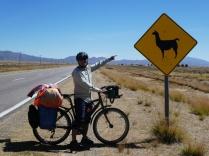 heute sehen wir viele Lamas