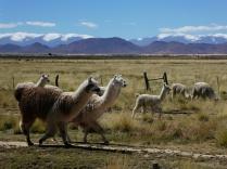 Lama on Rails