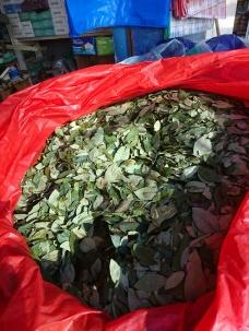 Coca-Blätter