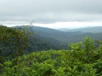 Der Yunga, ein Ausläufer des Amazonas