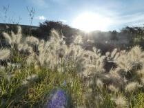 weiches Gras unterm Zelt