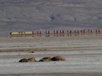 Zug nach Chile