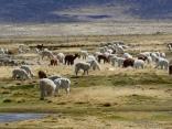 Herden am Weg