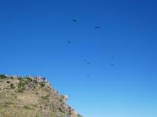 Die Kondore nutzen die Morgenthermik