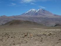 der Vulkan Aucanquilcha 6124m