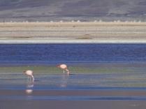Laguna de los Flamencos