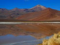 Morgenstimmung an der Laguna de los Flamencos