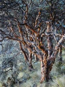 Papierbaum